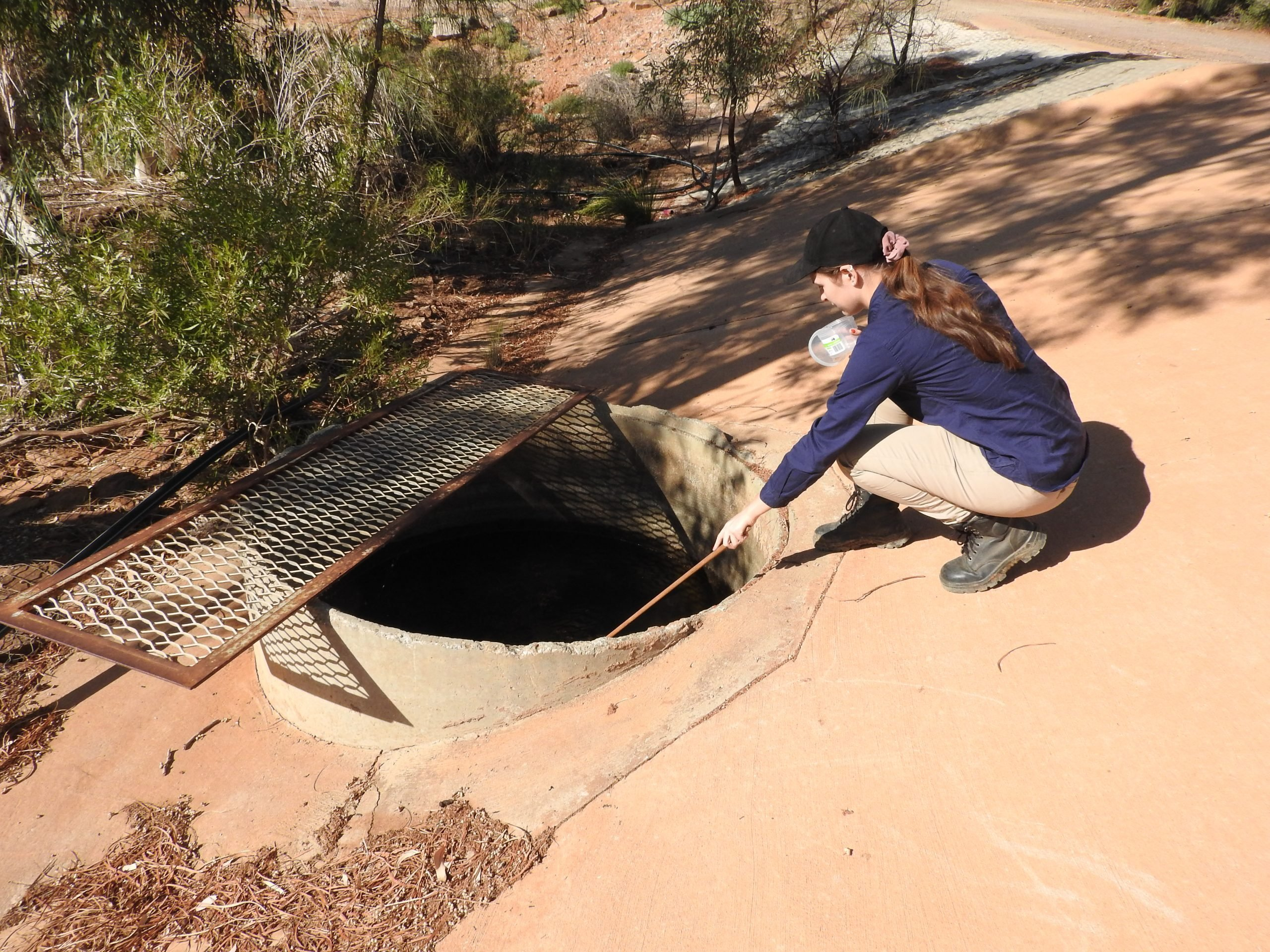 Mosquito survey - checking out draining pipes for mosquitos
