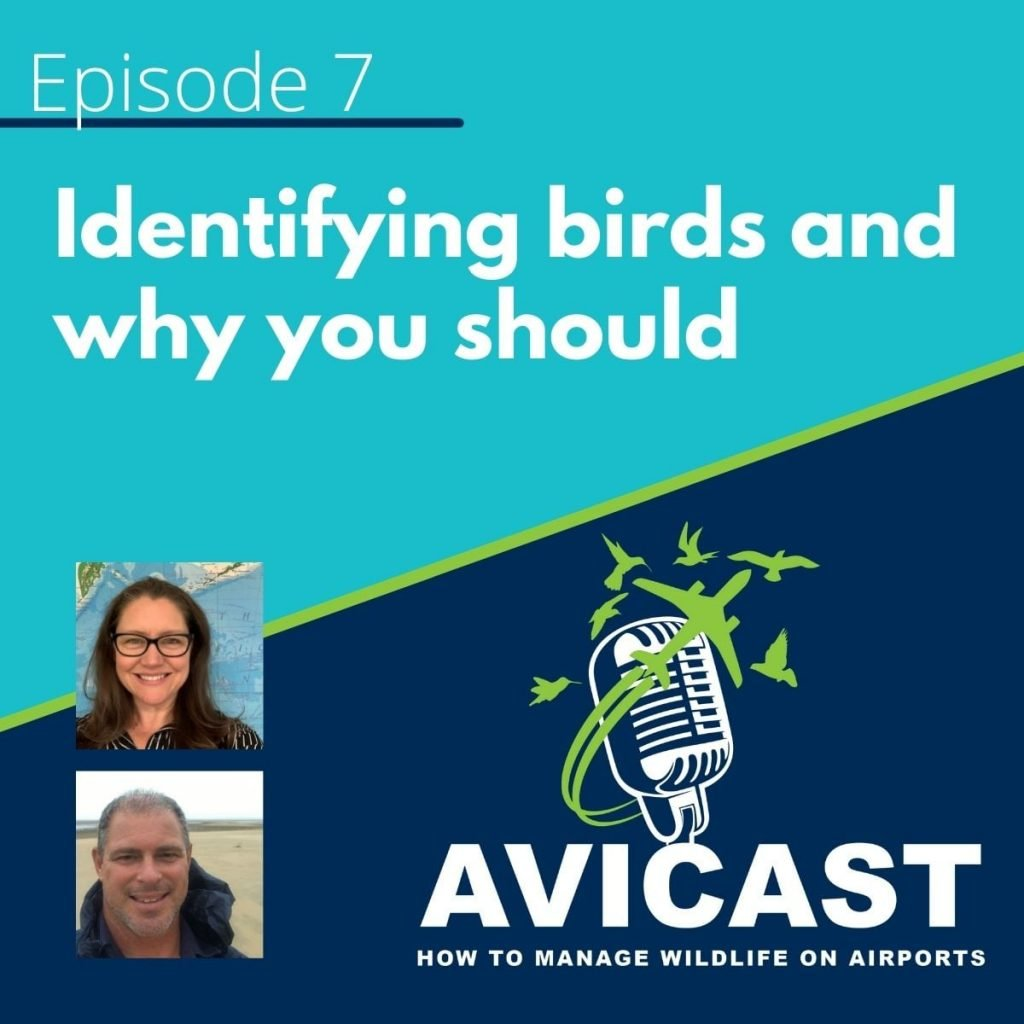 Identifying birds and why you should - Avicast - Episode 7