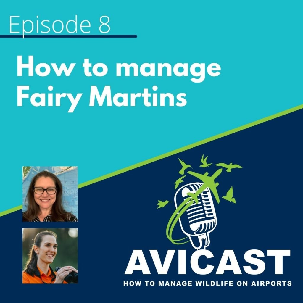 Avicast - Episode 8 - How to manage Fairy Martins