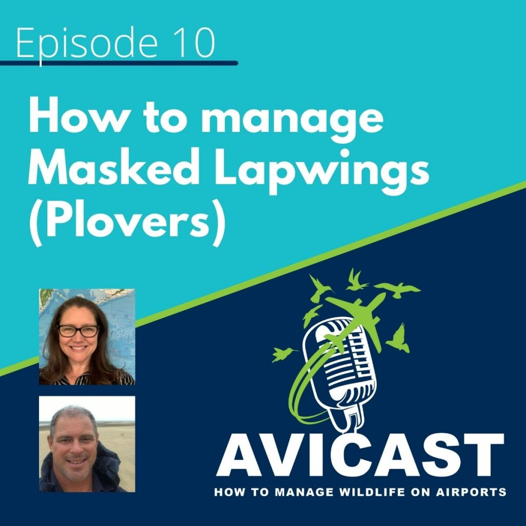 Avisure's Podcast Avicast Episode 10 How to manage Masked Lapwings - Plovers